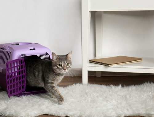 5 Ways to Ensure a Stress-Free Veterinary Visit